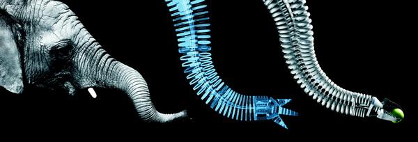 Phỏng sinh học: Lấy cấu tạo vòi voi để thiết kế